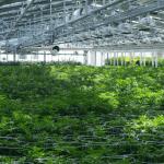 CMRE – Commercial Marijuana Real Estate