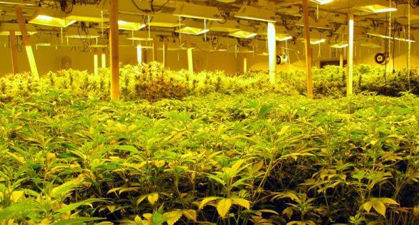 Marijuana Investment Properties